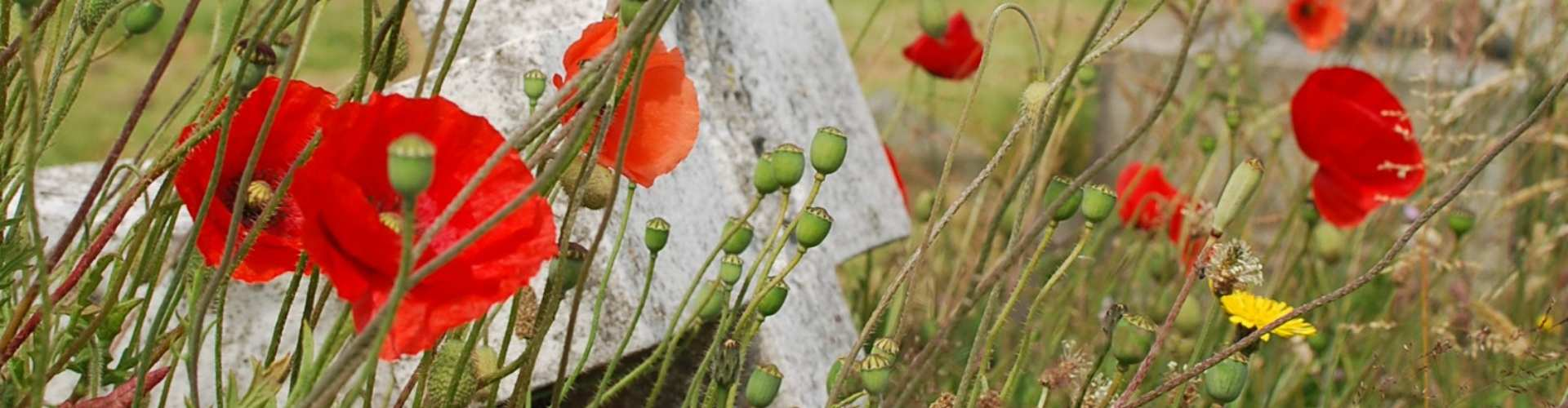 Halsbury Travel School English Literature Trip To The Somme